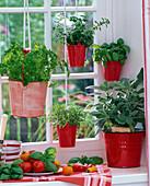 Herbs on the window, Petroselinum, Ocimum