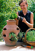 Plant pocket amphora with herbs