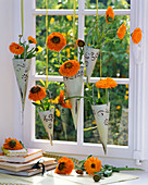 Calendula in pointed vases in the window, books