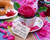 Pink (rose) in espresso cup with sign