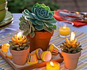 Echeveria in clay pot, colorful mini clay pots, candles