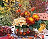 Chrysanthemum indicum und grandiflorum (Herbstchrysanthemen)