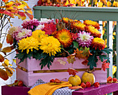 Chrysanthemum grandiflorum (Großblumige Chrysanthemen)