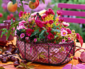 Aster in metal basket lined with paper, Aesculus