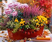 Orange Box with Chrysanthemum (Autumn Chrysanthemum)
