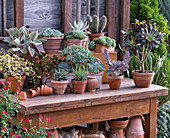 Succulents and cactus in clay pots and box on wooden table