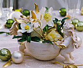 Helleborus niger (Christmas rose), Viscum album
