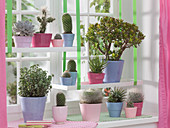 Window with succulents and cactuses