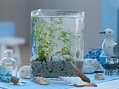 Mini aquarium as a maritime decoration