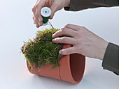 Pot with moss and catkins