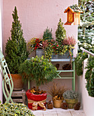 Winter balcony with Picea 'Conica', Pinus 'Varella'