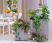 Large planters as a room divider