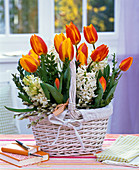 Tulipa, Hyacinthus in white basket with branches