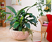 Spathiphyllum, Hedera in bowl with wood paneling
