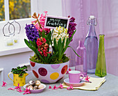 Hyacinthus in dotted bowl with sign 'Hallo Frühling'
