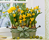 Narcissus 'Tete à Tete' in jardiniere with ribbon and Easter eggs