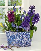 Hyacinthus (hyacinth) and Muscari (grape hyacinth)