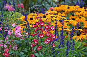 Colorful summer bed with Penstemon (beard thread), Salvia farinacea