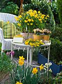 Narcissus 'Tete a Tete', Crocus chrysanthus 'Advance'