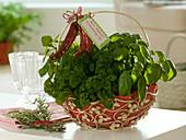 Metal basket with Petroselinum, Ocimum, Melissa