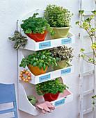 Shelf with herb pots
