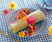 Kette aus Primula (Primeln) auf karierter gerollter Serviette