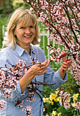 Woman cutting prunus (ornamental cherry) branches for the vase