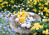 Straw hat as Easter basket with Easter eggs and bouquet from Narcissus