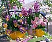 Viola cornuta 'Etain' (horn violet), Hyacinthus