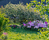 Table laid before blooming malus (apple tree)
