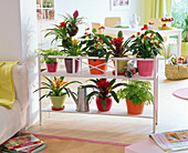 Flower bench as a room divider with Guzmania, Anthurium, Adiantum