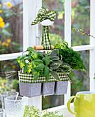 Ocimum (basil), Salvia (sage), Petroselinum (parsley)