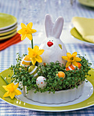 Lepidium in baking pan seeded as Easter basket with Narcissus