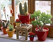 Cactus at the window, Cereus, Kalanchoe