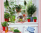 Herbs of Mentha, Salvia and Laurus on the window