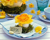 Napkin decoration with narcissus in blown egg on moss