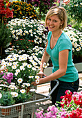 Woman buys Argyranthemum frutescens in the shopping cart