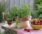Fruit Herbal Mentha species in basket, Fragaria