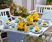 Blue-yellow easter table decoration with daffodil