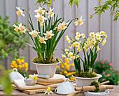 Narcissus 'Kate Heath', 'Avalanche' (Daffodil)