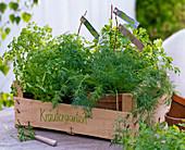 Obststiege as a herb garden