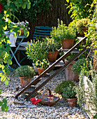 Old iron staircase converted as a plant staircase