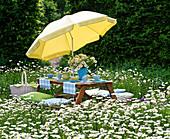 Table laid in Leucanthemum (spring marguerite) meadow