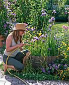 Woman filling barrel with iris sibirica, laevigata and pseudacorus