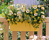 Spray box bright yellow with corn yellow
