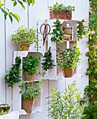 White painted fruit trays as herbs shelves