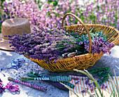 Lavandula (lavender) in basket, lavender bottles