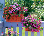 Orange baskets as alternative flower boxes