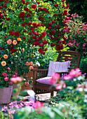 Pink 'Flaming Dance' (climbing rose), 'Lupo' (dwarf rose) on stem