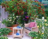 Balcony with Roses: Pink 'Flaming Dance', Pink 'Teasing Georgia'